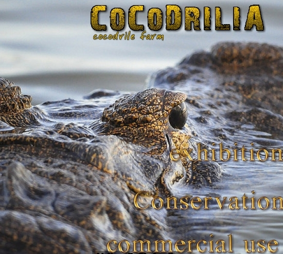 cocodrilia cocodrile farm