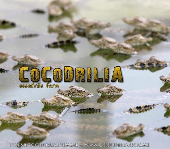 cocodrilia