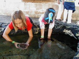 Aquarium coral reef life at Xcaret