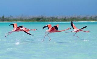 Day trip Rio Lagartos and San Felipe, Yucatan