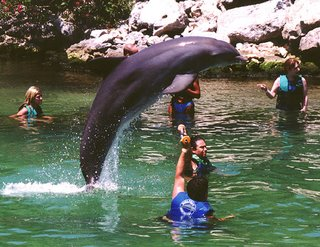 Nature in the Mexican Caribbean