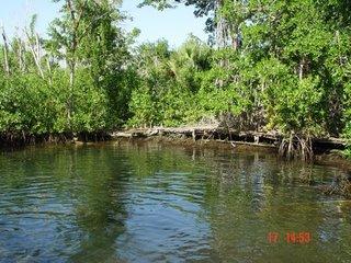 Dzilam de Bravo, Yucatan. A natural reserve.