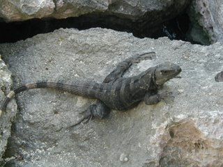 Cocodrile adventure reptil extreme see and touch them