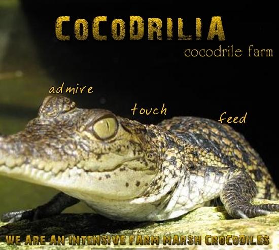 Cocodrilia, granja de cocodrilos visita Bacalar