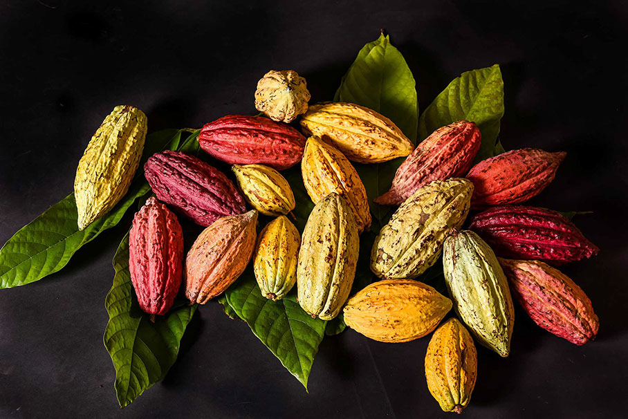 Chocolate Cacao History origin