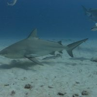 Dive with sharks